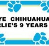 Chihuahua Personalized Birthday Party Banner